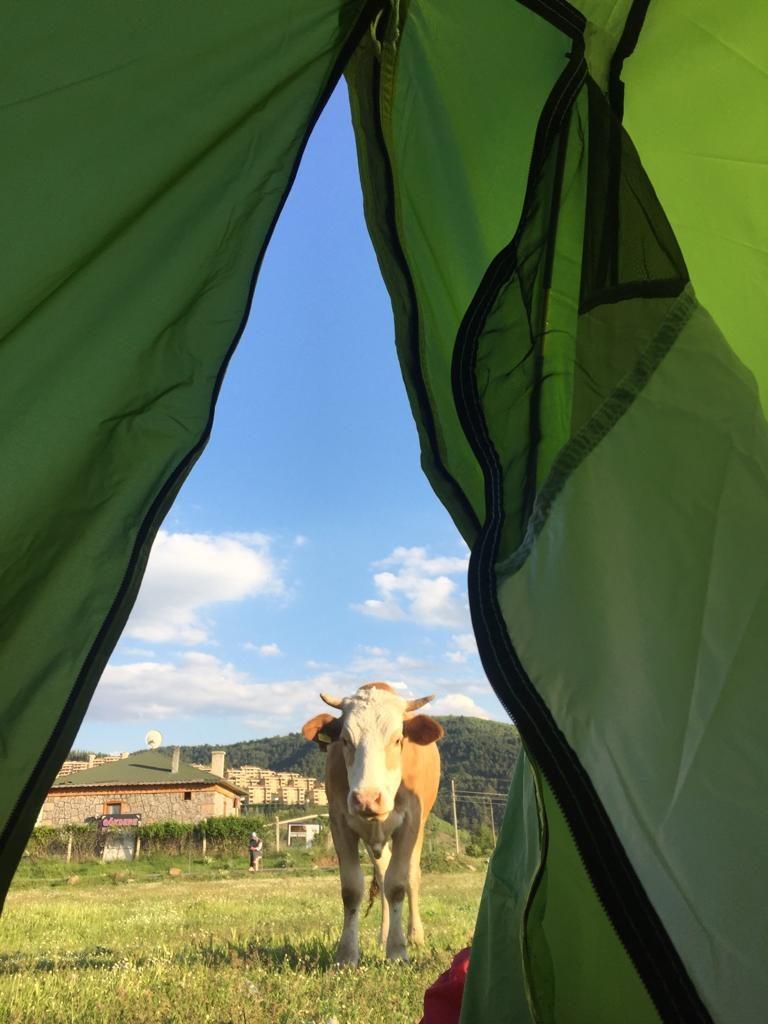 Despertar acompañados de vacas con Marismeña