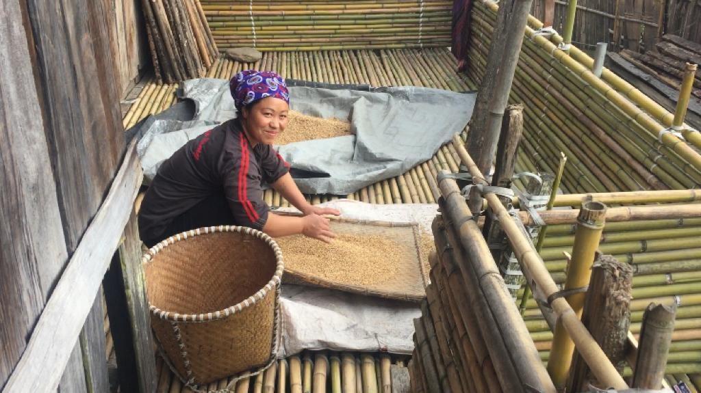 La hija del dueño de la casa trabajando el arroz
