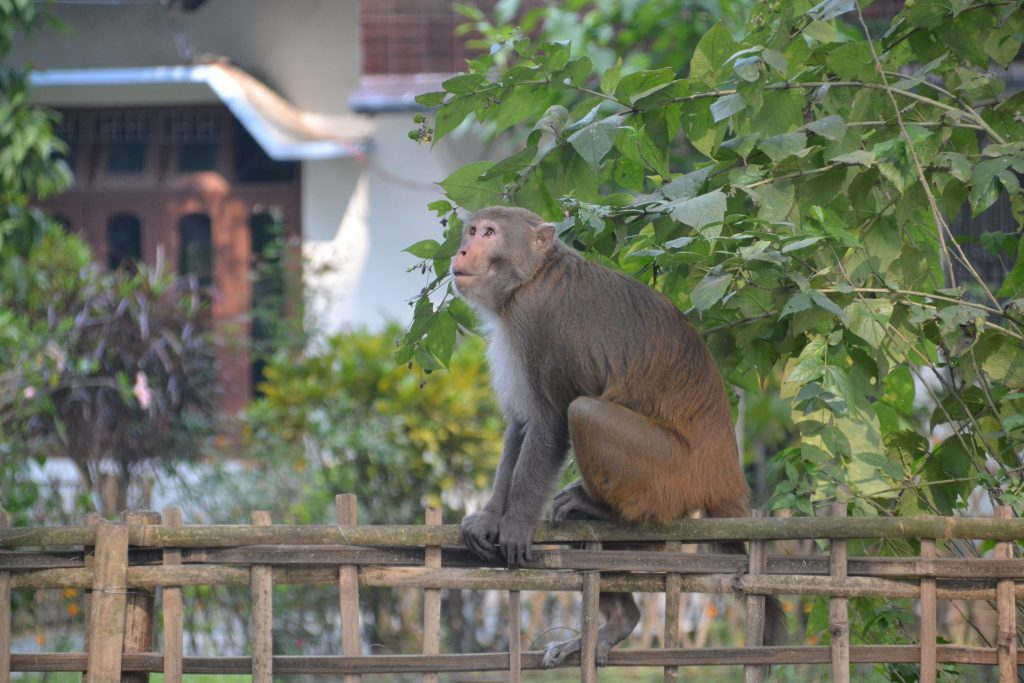 Fauna de Majuli