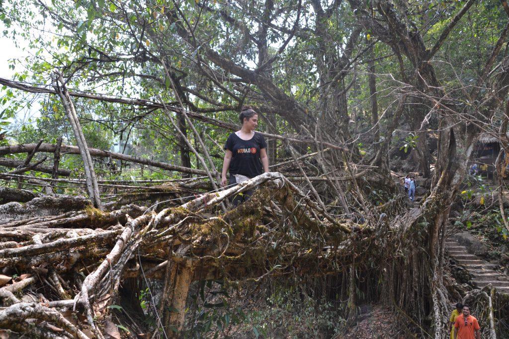 Puente hecho con raíces de árboles vivos en Nongrita, India