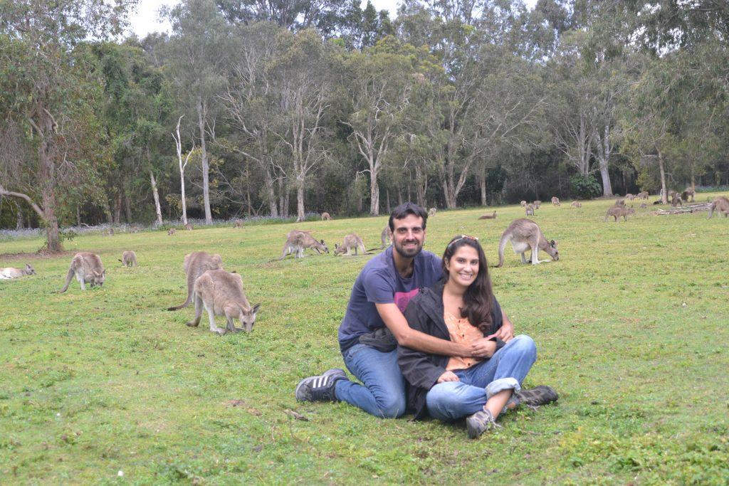 Viendo canguros australianos