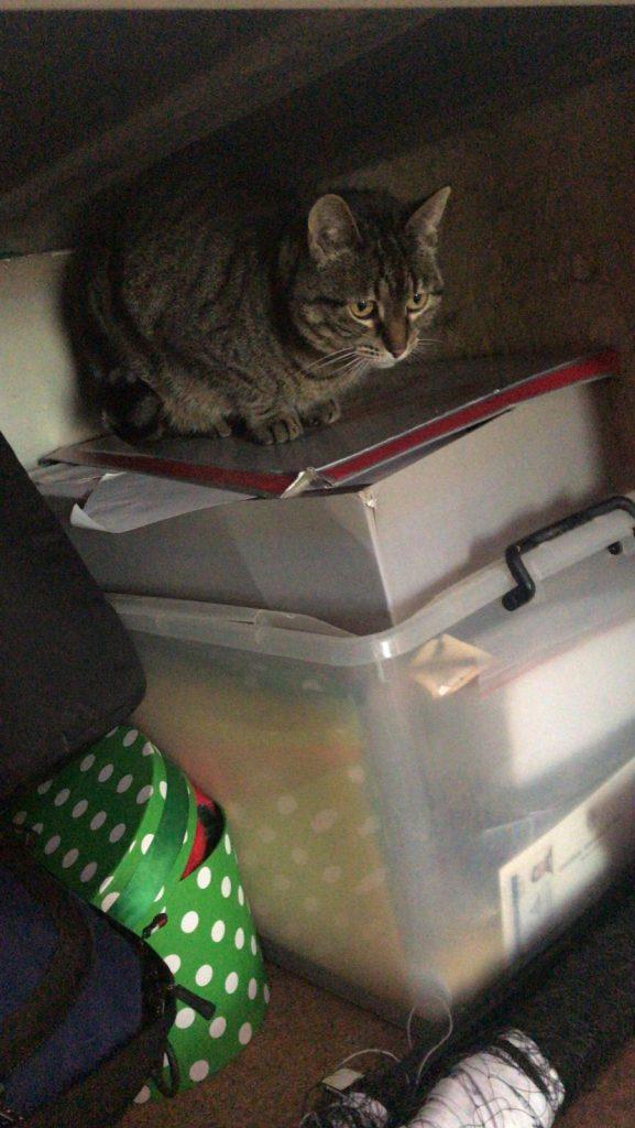 Tish escondida en el armario